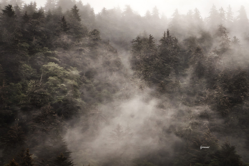 Low clouds in the trees in Juno, Alaska