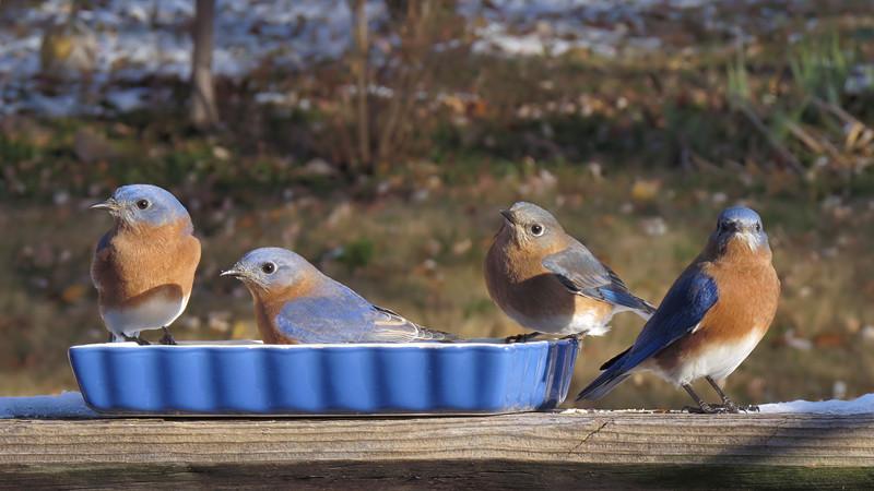 sx50_bluebird_104.jpg