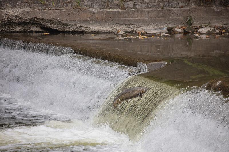 salmon upstream (25 of 48).jpg