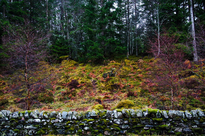 Scotland-Highland-9174.jpg