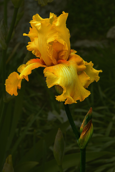 OUR IRISES-2016-0474-Edit.jpg