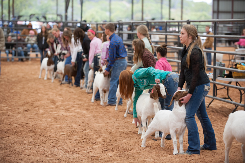 Hays_County_Show-6594.jpg