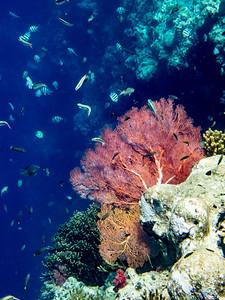 09 Bali Underwater