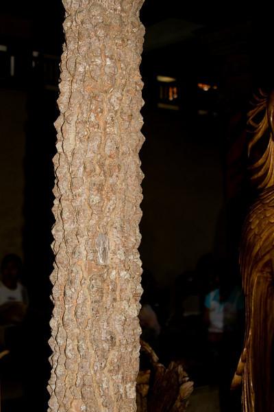Crocodile Wood Tree.jpg