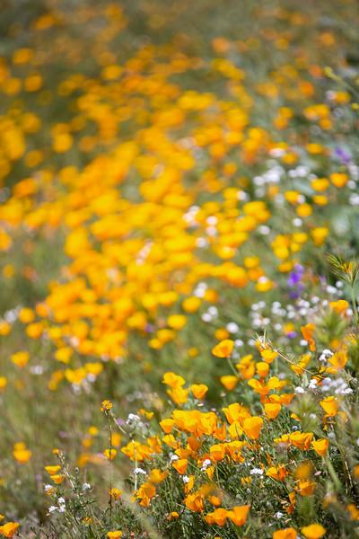 Spring Flowers B-127.jpg