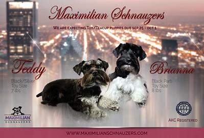 Brianna & Teddy Puppies, DOB 9/29/2020