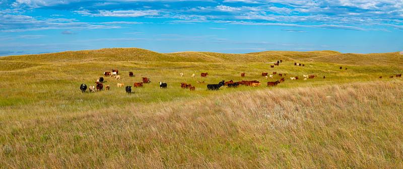 Horn Ranch--4.jpg