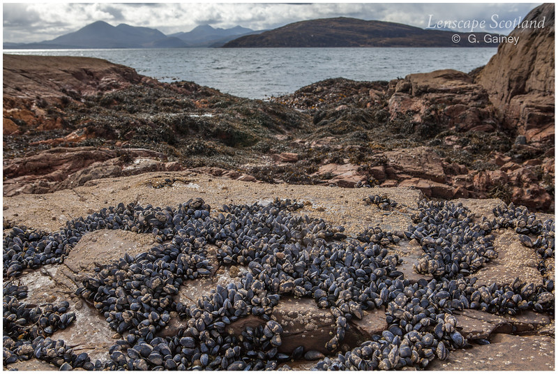 Mussel beds, Uags