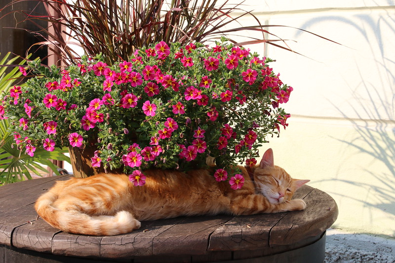 Slovene kitty
