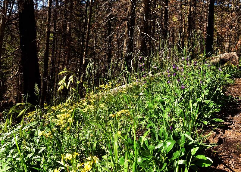 NEA_0351-7x5-Wild Flowers.jpg