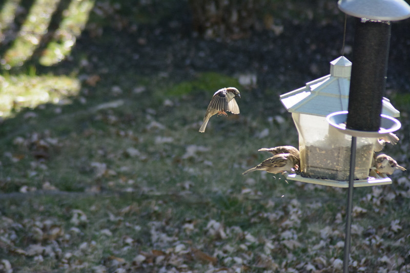 Birds flying-013
