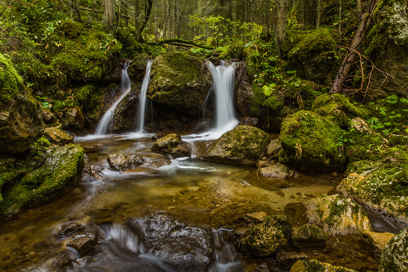 Water streams in a Dolomites forest