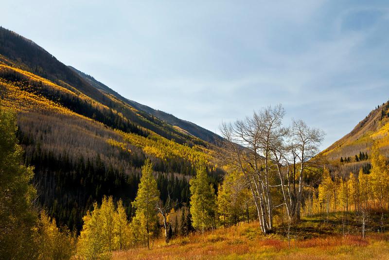 Fall color and mountainside near Aspen, Colorado