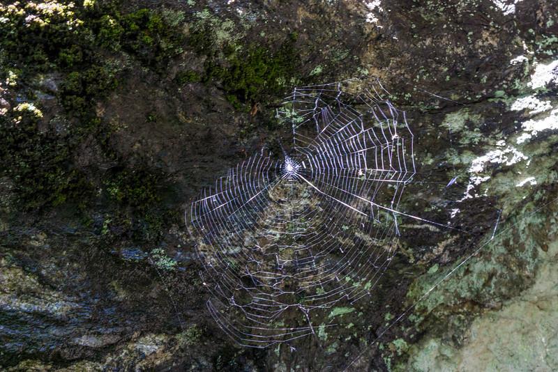 Charlotte's Web.jpg