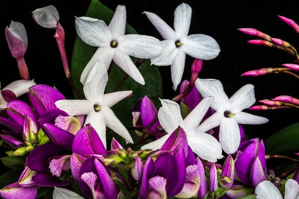 March 6 - Jasmine.jpg