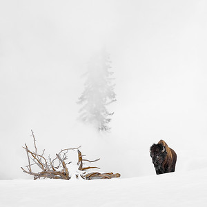 Yellowstone and vicinity