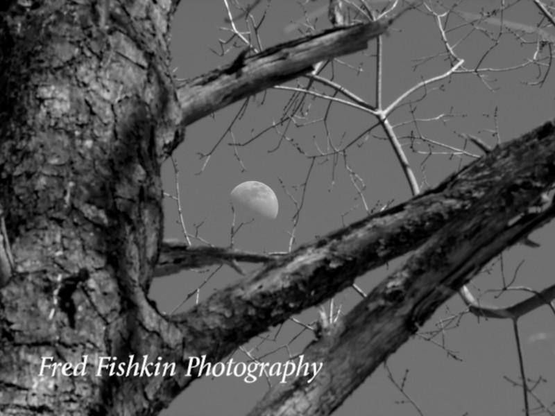 tree moon bw.jpg