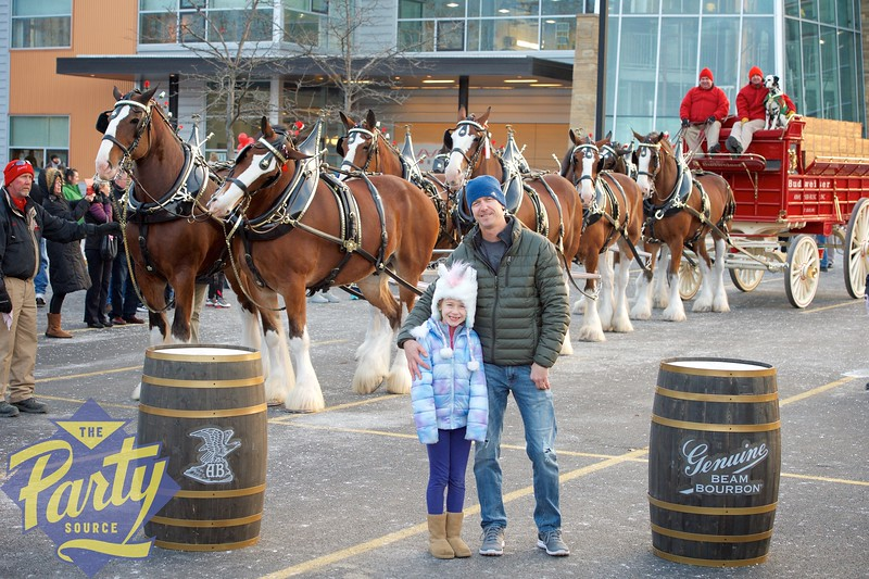 Clydesdale Portraits 319.jpg