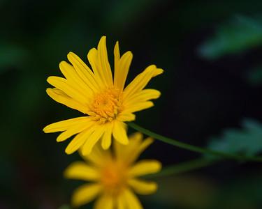 Winnie's Garden