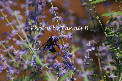 Flowers & Bees-2010