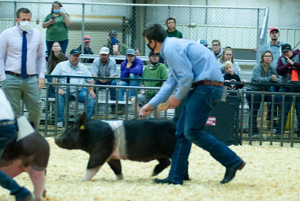 Tulsa Commercial Gilt Show