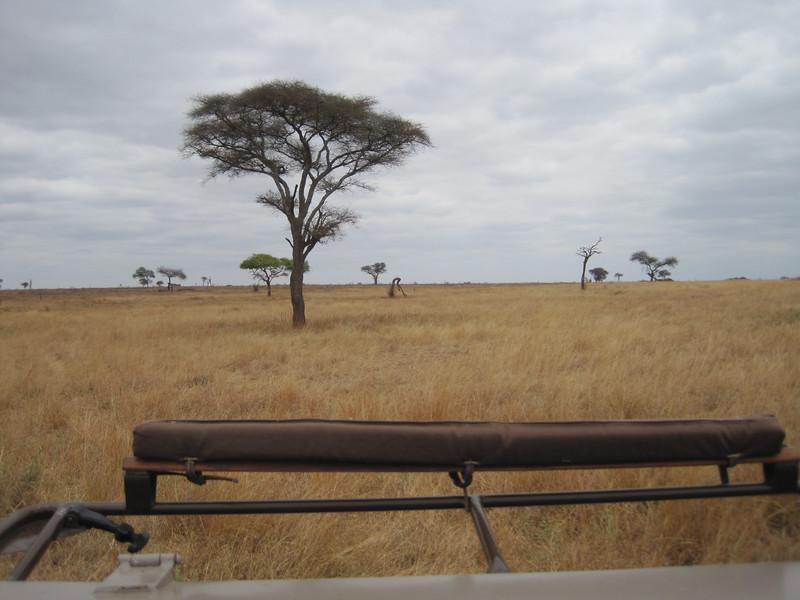 Tanzania14-3216.jpg