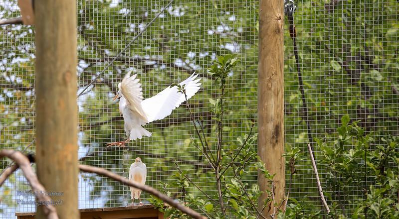 2016-07-17 Fort Wayne Zoo 877LR.jpg