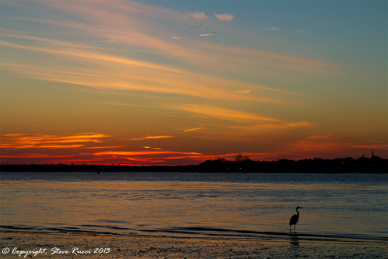 Heron fishing in the St. John's River at sunset near Mayport.