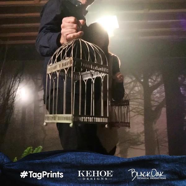 bird_box_tagflix_93.mp4