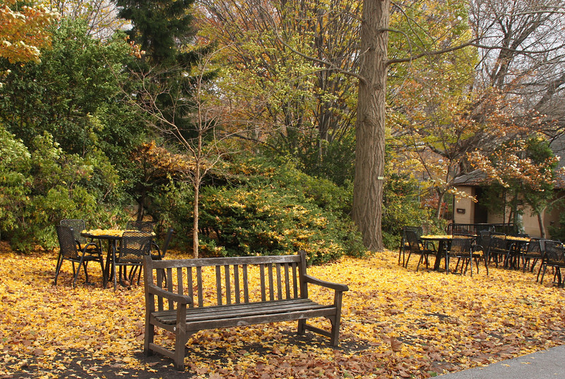 Yes, it is fall in Philly at the zoo........