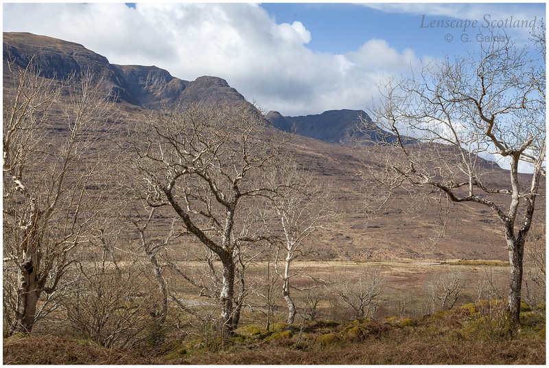 Rassal Ash Wood Nature Reserve and Beinn Bhan eastern corries (2)