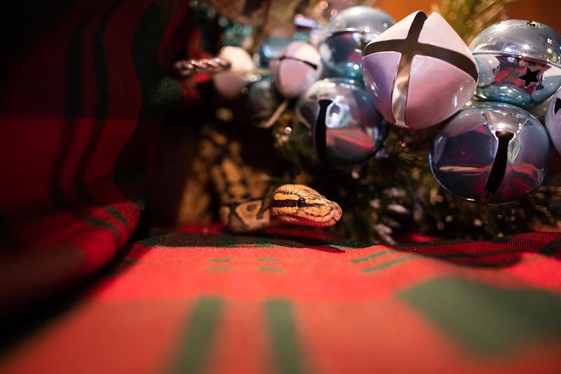 ChristmasSnakes19_0018.jpg