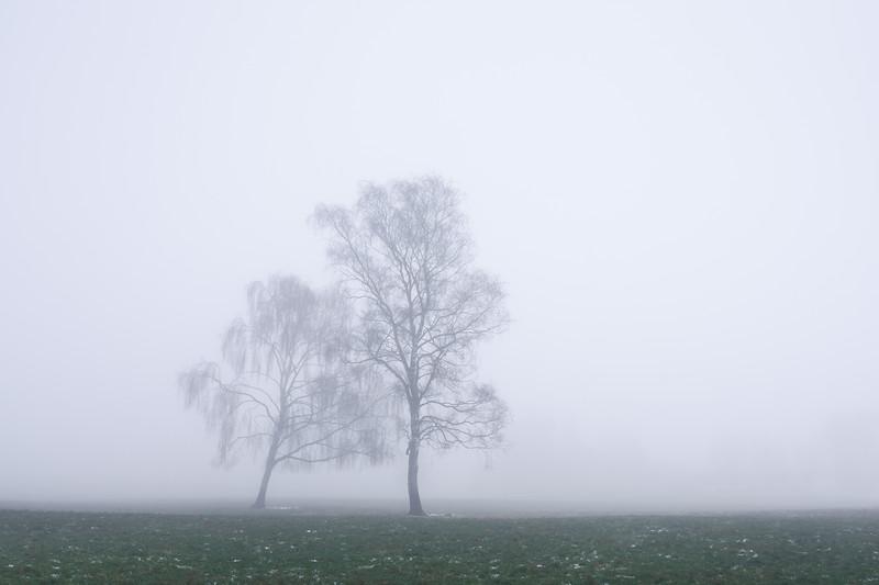 Landscape Photography Denmark Fog Trees.jpg