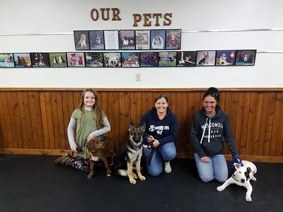 Puppy Class 5pm September/October 2018