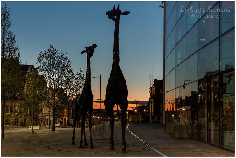 Giraffe sculpture outside the Omni Centre, Greenside Place (2)