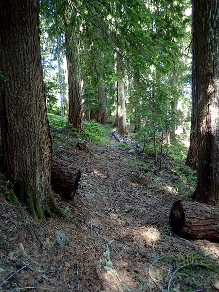 Middle Santiam Wilderness Oregon