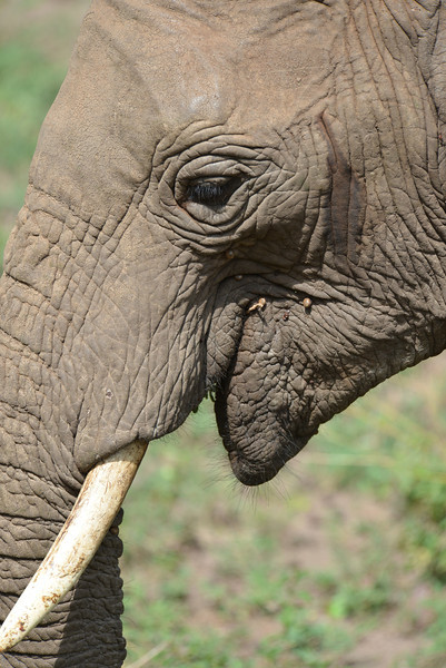East Africa Safari 452.jpg