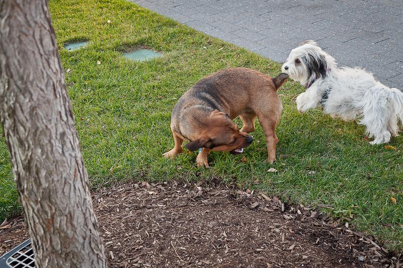dog run25.jpg