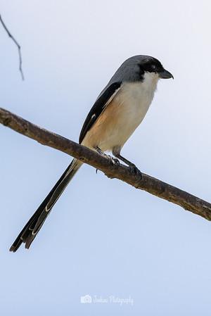 2021-03-18 Birding in the east
