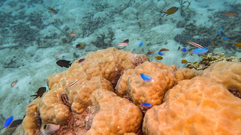 Great Barrier Reef - Cairns Queensland AUS