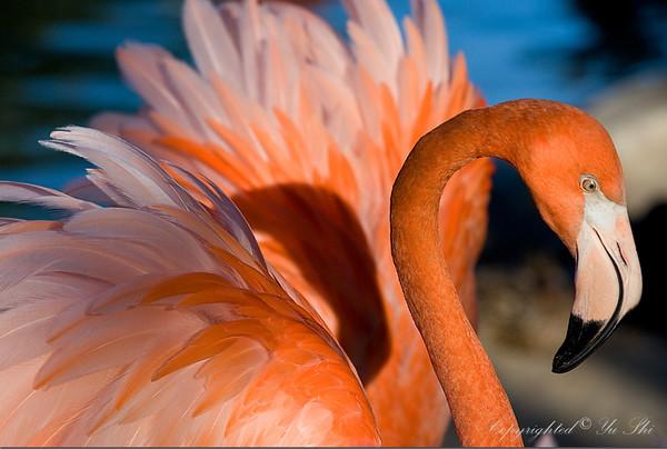 Flamingo 2.jpg