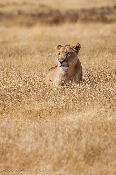 Ngorongoro-26.jpg
