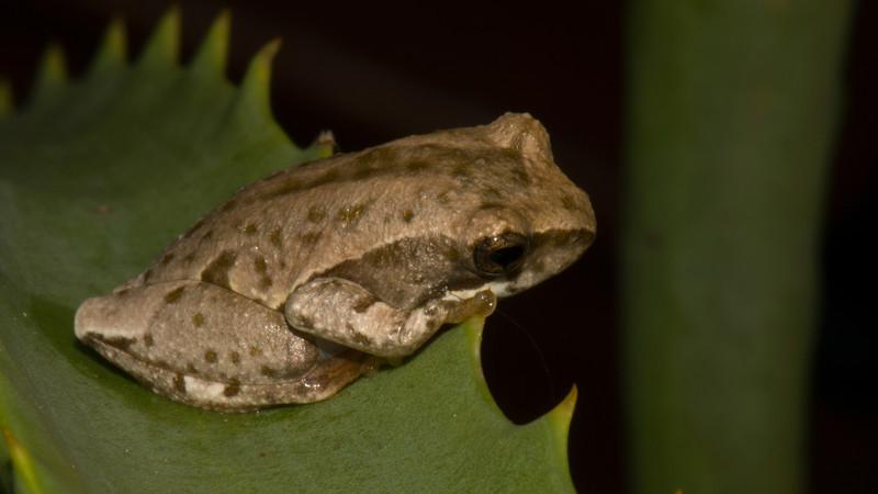 014_4719 Frog.jpg