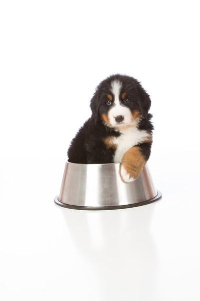 2013-Pearson Pups-Jun02-0341.jpg