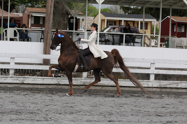 043 ASB 5 Gaited pleasure