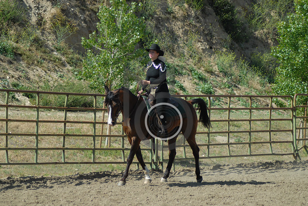 Class 47: All Breed Western Pleasure 18 & Over