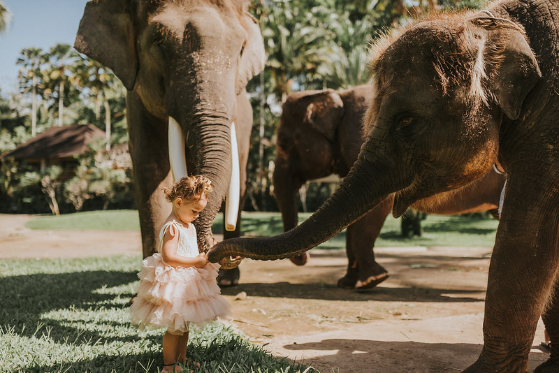 VTV_family_photoshoot_elephants_Bali_ (46).jpg