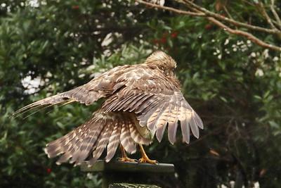 2020 Hawk