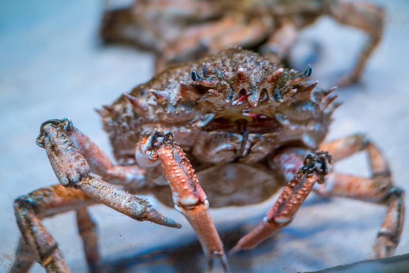 Crab at London Zoo