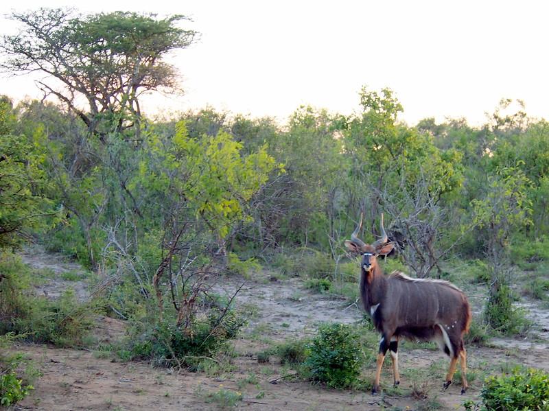 P5046307-cautious-animal.JPG